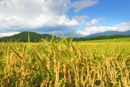 発芽玄米の販売店