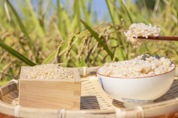 発芽玄米の保存方法